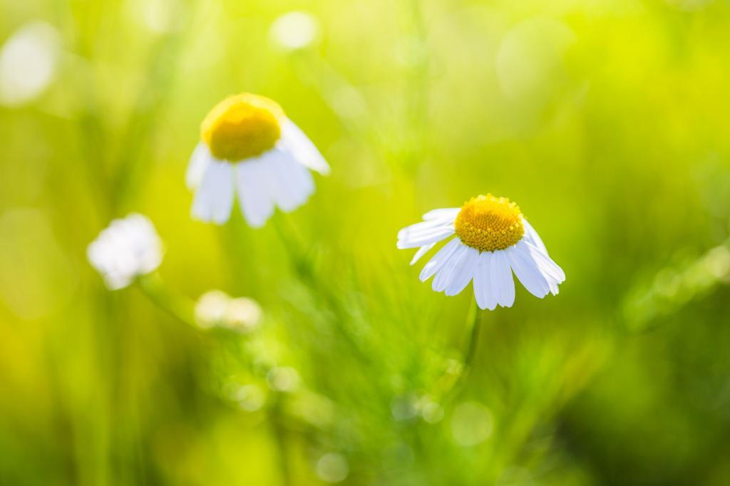 美妙的雏菊与明亮的背景