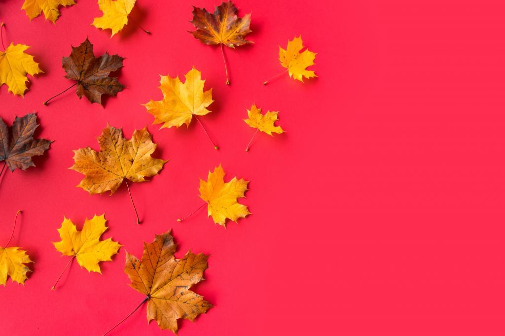 平秋季红色背景与文本的空间
