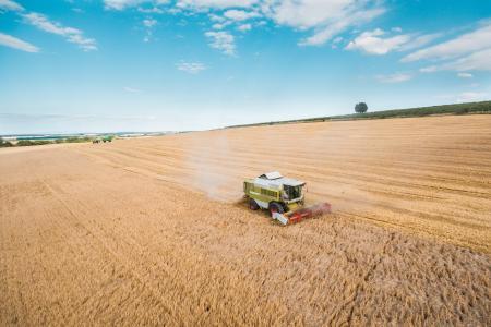 联合收割机收割小麦作物