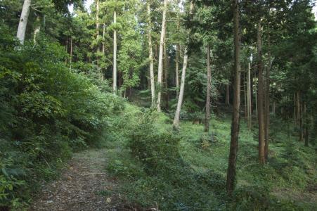 Mt. Tsukuba免费图片