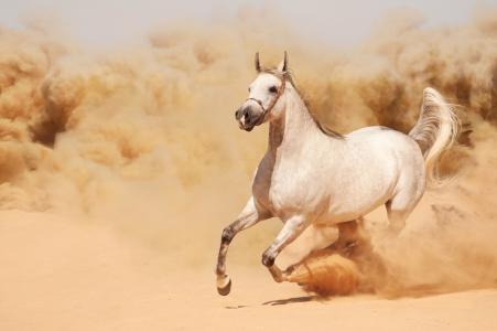 沙漠中奔驰的白马