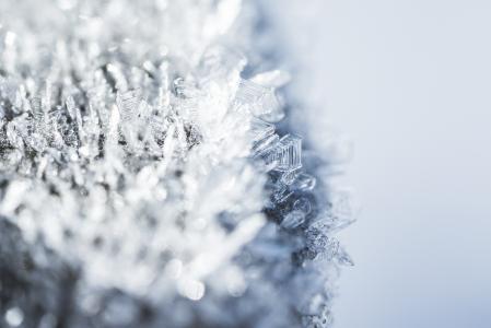 早晨白杨树霜冻结的雪花关闭