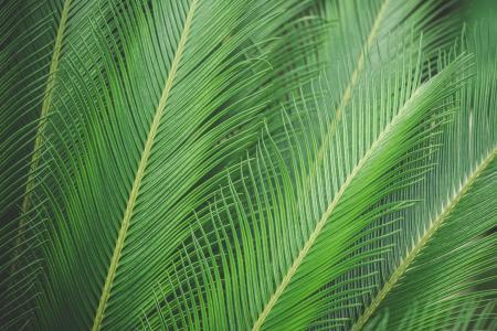 绿色棕榈叶