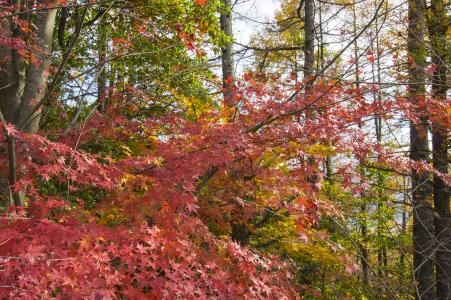 秋叶免费图片
