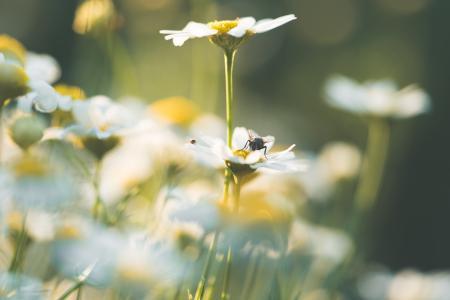 Daisy Flowers #3