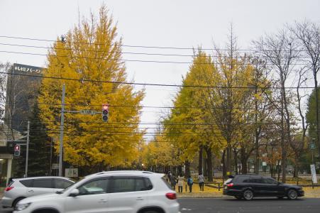 中岛公园免费图片