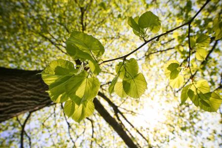 树叶子和树梢