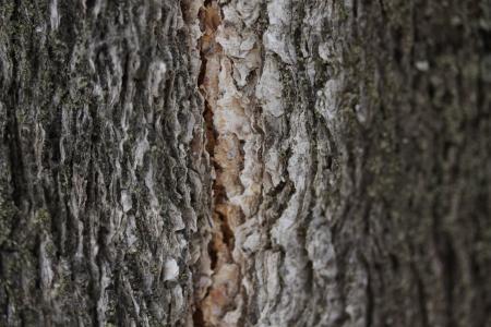 干枯细密树皮