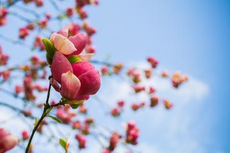 春天树开花细节