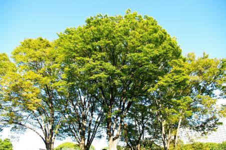Ninomaru花园(皇宫)免费图片