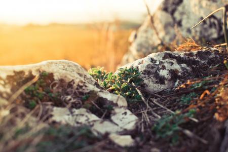 植物和岩石