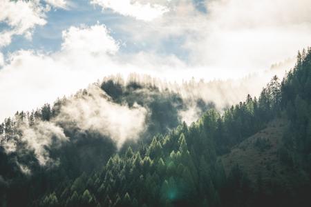美好的早晨山森林风景