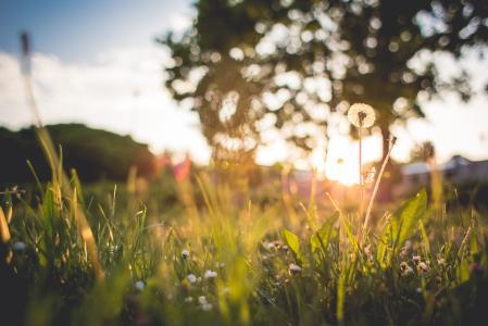 另一只草日落