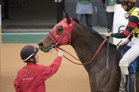 Racehorse免费图片