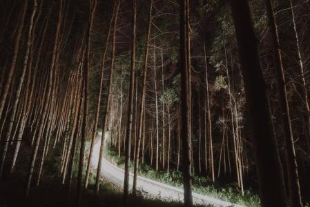 唯美森林公路