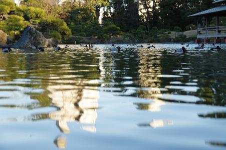 水面(清澄花园)免费股票照片
