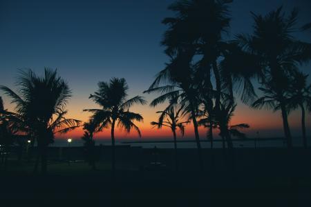 日落棕榈与无云的天空