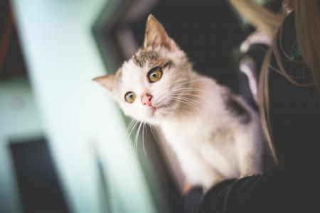 在她的胳膊的白色猫