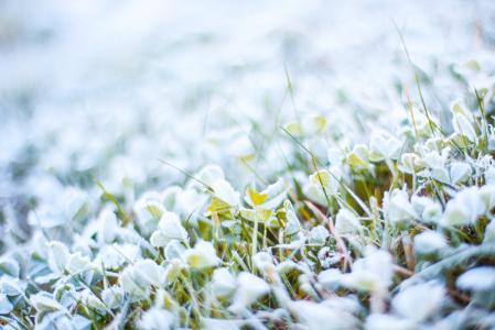 早晨冻草与白霜