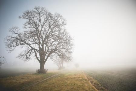 早晨有雾的路径
