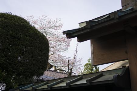 从房子里可以看到樱花