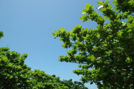 冲绳树和天空免费图片