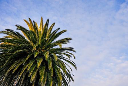 海滩棕榈树与多云的天空