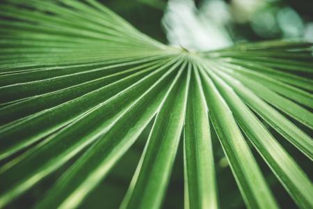 绿色棕榈热带植物
