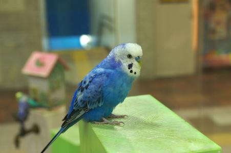 鸟(鹦鹉)免费照片