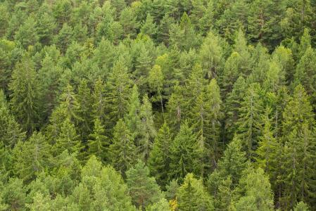 绿色的绿色森林树木