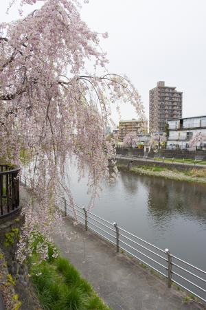 Utsunomiya Tagawa免费图片