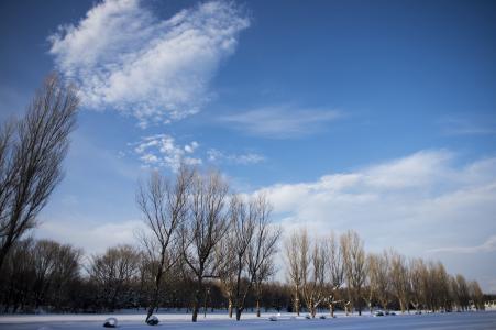 冬天树和天空免费图片