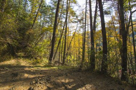 森林免费股票照片