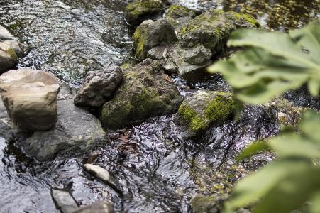 Inokashira公园自由流动的水流动的材料