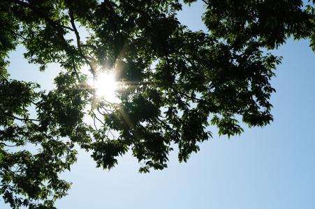 太阳和树免费图片