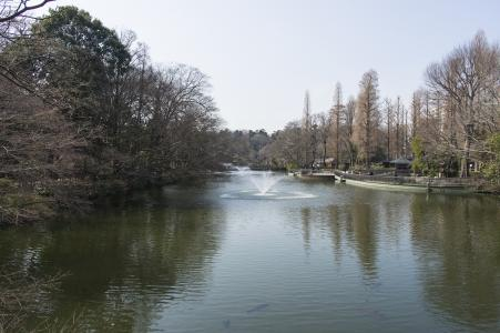 Inokashira公园免费库存照片
