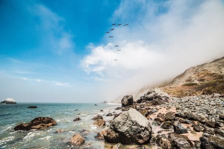 沿着海洋海岸线飞行的9只鸟