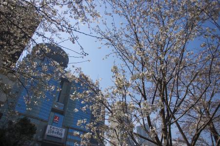 樱桃TBS周围免费照片