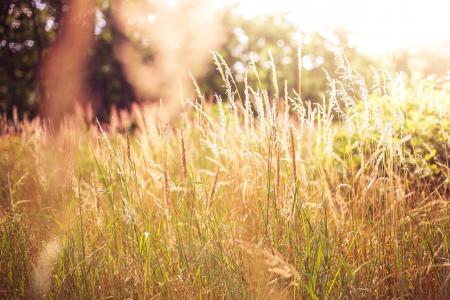 高草对太阳
