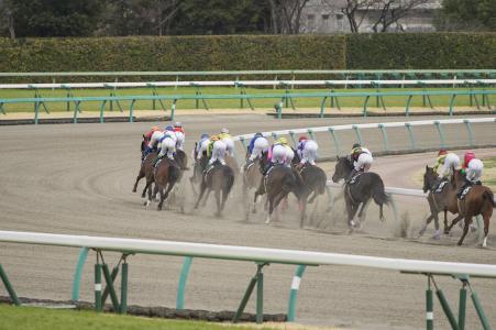 赛马免费图片