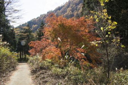 Mitsuzen的秋叶免费照片素材