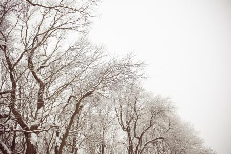 白色和布朗多雪的森林