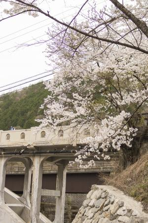 Waratase桥和樱花免费照片