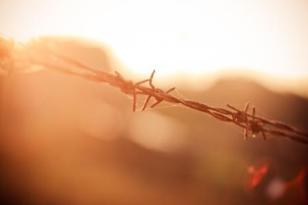 在阳光下的铁丝网