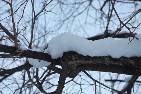 雪免费图片