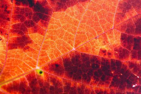 红色秋天叶子结构背景