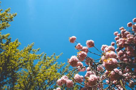 春天的颜色