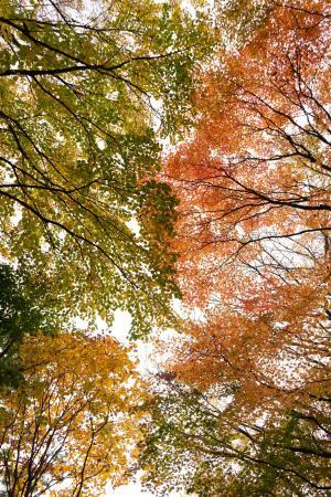 秋天树林风景摄影