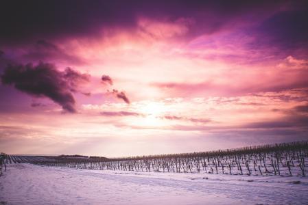 太阳和白雪皑皑的葡萄园的云
