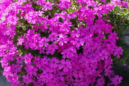 草樱桃树的照片